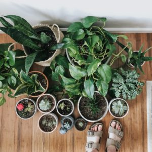 5 Low Maintenance House Plants That Are Hard To Kill!