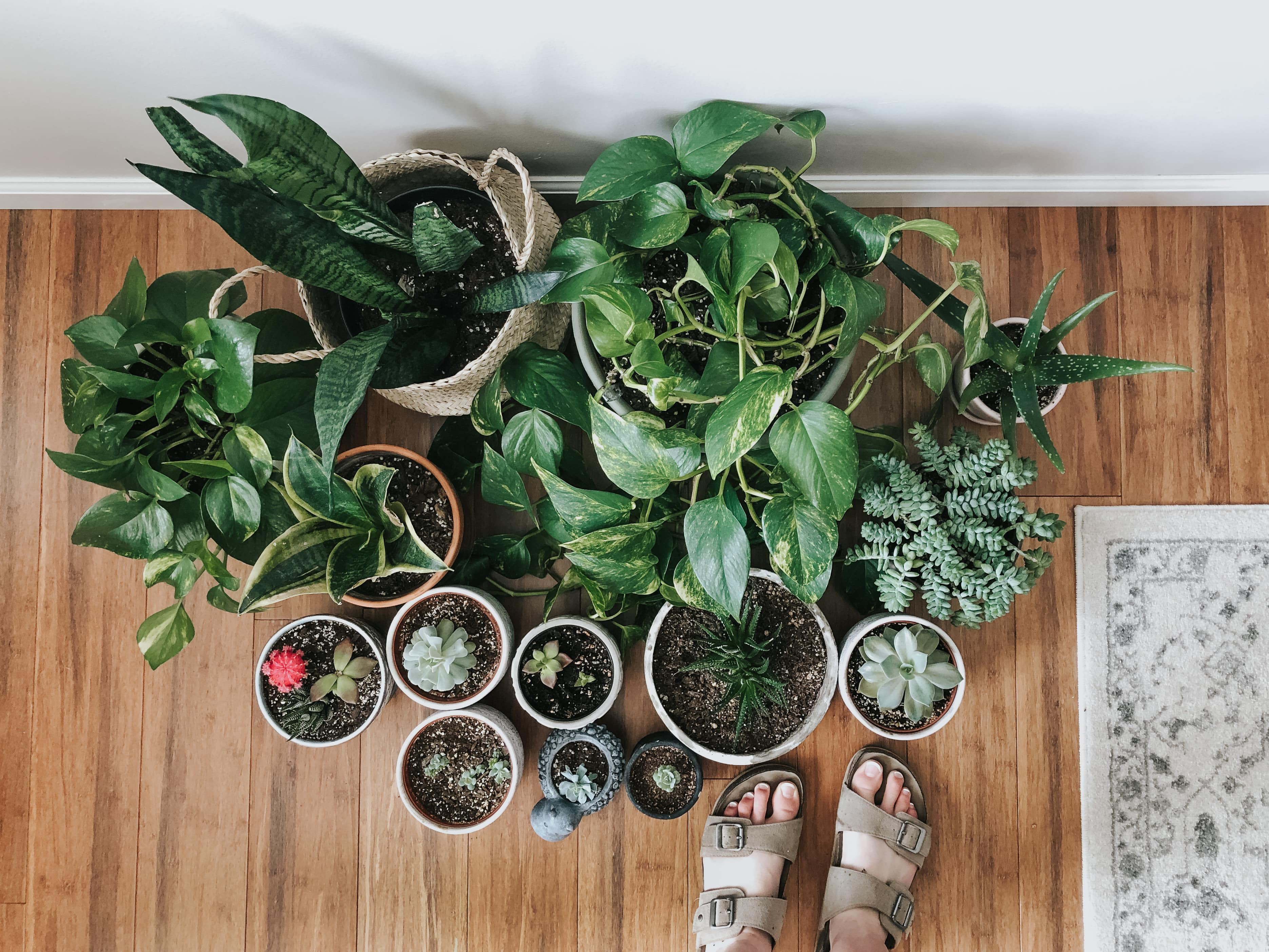 5 Low Maintenance House Plants That Are Hard To Kill ... I Killed My Houseplant on